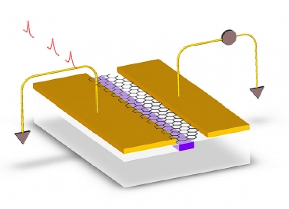In a new graphene-on-silicon photodetector, electrodes (gold) are deposited, slightly asymmetrically, on either side of a silicon waveguide (purple). The asymmetry causes electrons kicked free by incoming light to escape the layer of graphene (hexagons) as an electrical current.  GRAPHIC COURTESY OF THE RESEARCHERS