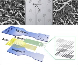Metal electrodes (top left) are opaque, obstructing views of neural tissue. DARPA has developed new graphene sensors (top middle).  Placed on a flexible plastic backing (bottom), the sensors are part of a proof-of-concept tool for use in neural imaging (top right). (Source: DARPA)