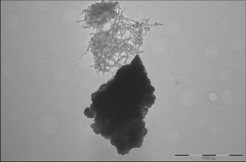 Lithium manganese nickel oxide and carbon nanotubes clumping separately, with no specific interactions. (Source: Evgenia Barannikova/UMBC)