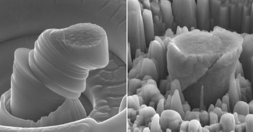 At left, a deformed sample of pure metal; at right, the strong new metal made of magnesium with silicon carbide nanoparticles. Each central micropillar is about 4 micrometers across. (Source: UCLA)