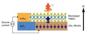 This schematic shows a TMDC monolayer coupled with a host ferromagnetic semiconductor, which is an experimental approach developed by Berkeley Lab scientists that could lead to valleytronic devices. Valley polarization can be directly determined from the helicity of the emitted electroluminescence, shown by the orange arrow, as a result of electrically injected spin-polarized holes to the TMDC monolayer, shown by the blue arrow. The black arrow represents the direction of the applied magnetic field. (Source: Berkeley Lab)