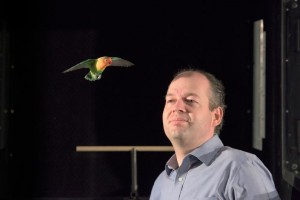 Ferrari, a lovebird, flies near Stanford mechanical engineering Assistant Professor David Lentink, who is using a wind tunnel to probe the mysteries of birds in flight. (Source: Stanford University)