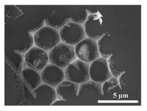 Electron microscopy showing one of the unique geometries observed in the nano-silicon power derived from diatomaceous earth. (Source: UC Riverside)