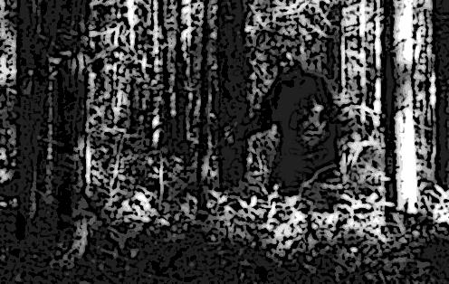 Sasquatch Sighting