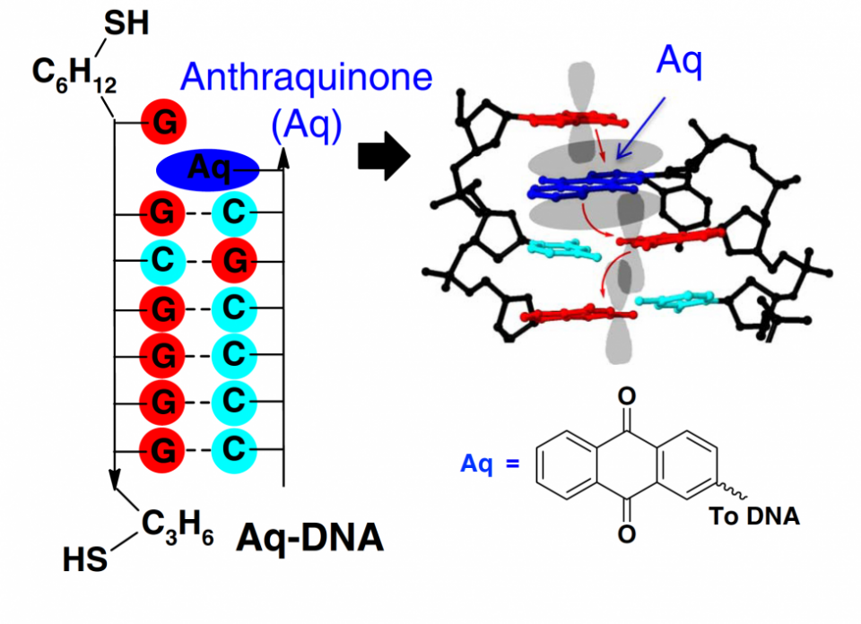 DNA switch Aq ASU mar14